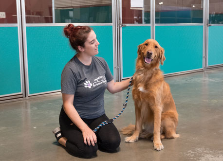 Golden retriever at Joyful Paws
