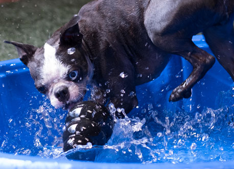 Dog splashing in the water